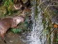 Wildpark Tambach 2014-15