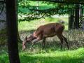 Wildpark Tambach 2014-16