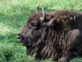 Wildpark Tambach 2014-29