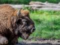 Wildpark Tambach 2014-30