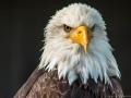 Wildpark Tambach 2014-4