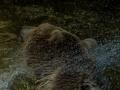 Zoo_Salzburg-10